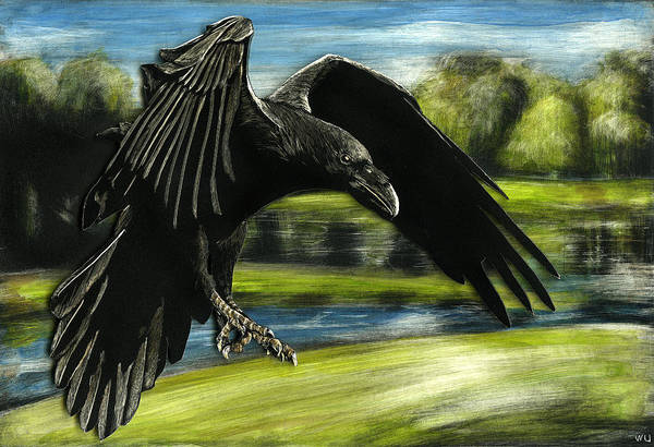 Drawing - Flying Crow by William Underwood