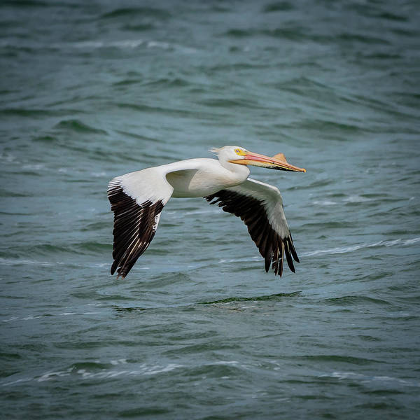 Photograph - Flying by David Heilman