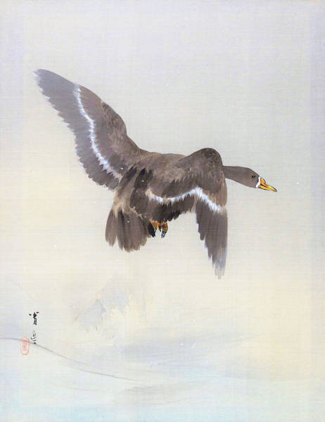 Wall Art - Painting - Flying Duck - Digital Remastered Edition by Watanabe Seitei