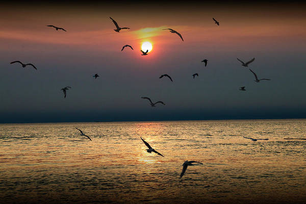 Wall Art - Photograph - Flying Gulls At Sunset On Lake Michigan by Randall Nyhof