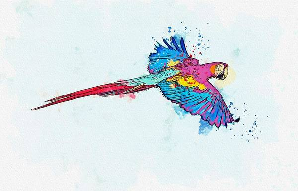 Wall Art - Painting - Flying Macaw -  Watercolor By Ahmet Asar by Celestial Images