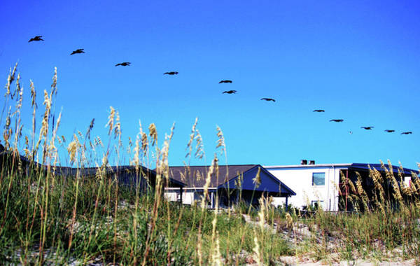 Photograph - Flying Over Beach Houses by Cynthia Guinn