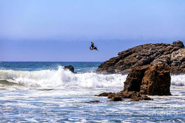 Photograph - Flying Over Point Dume In Malibu by John Rizzuto