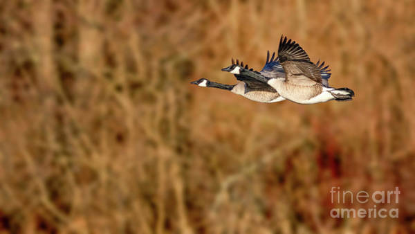 Wall Art - Photograph - Flying Pair by Todd Bielby