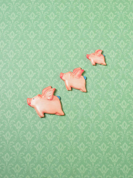 Wall Art - Photograph - Flying Pig Ornaments On Wallpapered by Peter Dazeley