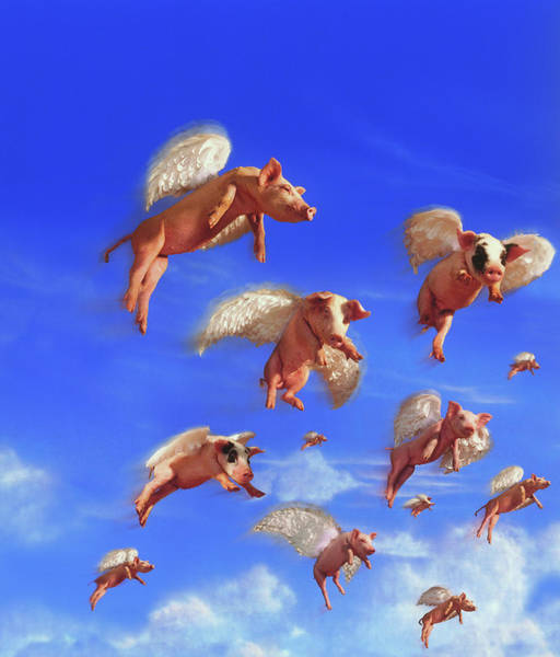 Wall Art - Photograph - Flying Pigs by Jay P. Morgan