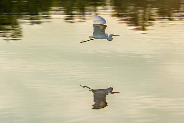Photograph - Flying Reflection by Jack Peterson
