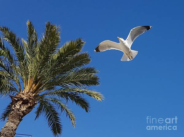 Wall Art - Photograph - Flying Seagull by Jeepee Aero