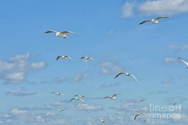Wall Art - Photograph - Flying Seagulls by Patricia Hofmeester