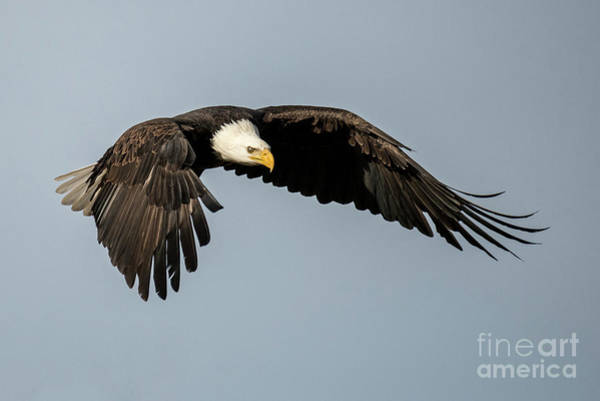 Wall Art - Photograph - Focus Ahead by Mike Dawson