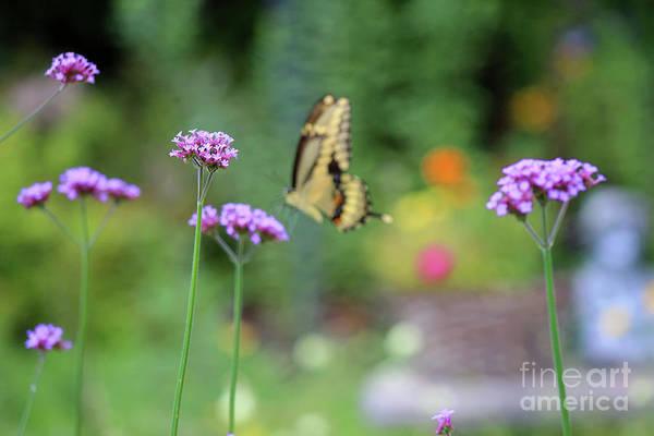 Photograph - Focus by Karen Adams