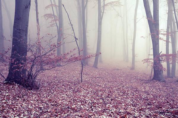 Wall Art - Photograph - Fog by Floriana