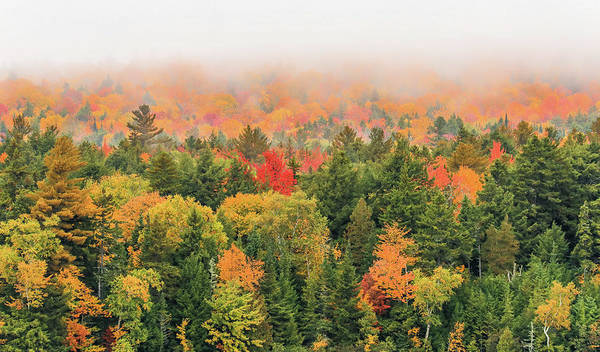 Photograph - Foggy Autumn Forest by Dan Sproul