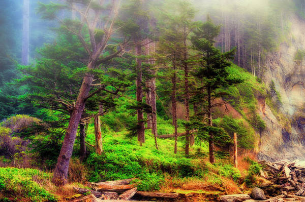 Photograph - Foggy Coastal Forest by Dee Browning