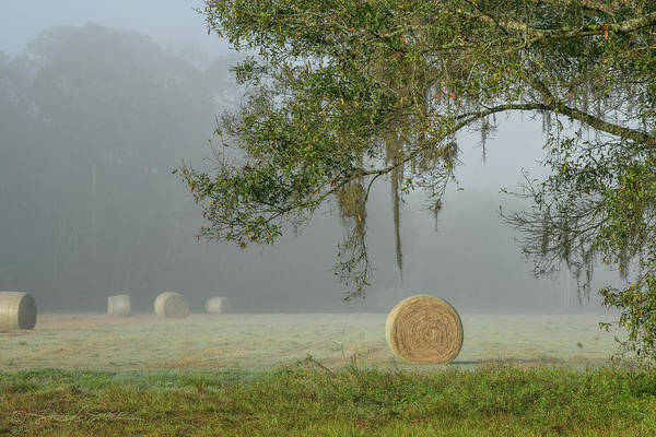 Photograph - Foggy Elkton Morning With Hay Bales by Stacey Sather