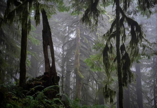 Photograph - Foggy Forest by Steven Clark