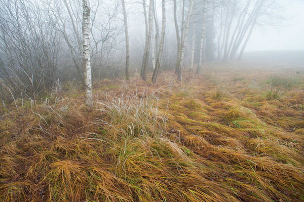 Moored Photograph - Foggy Moor Landscape With Birch Trees by Olaf Broders