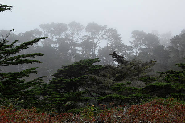 Photograph - Foggy Morning At Point Lobos 2 by Marie Leslie