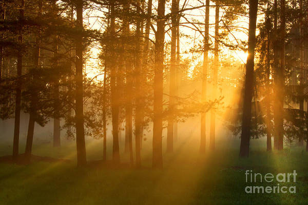 Camp Wall Art - Photograph - Foggy Morning In A Forest by Belkos