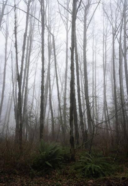 Photograph - Foggy Santiam by Steven Clark