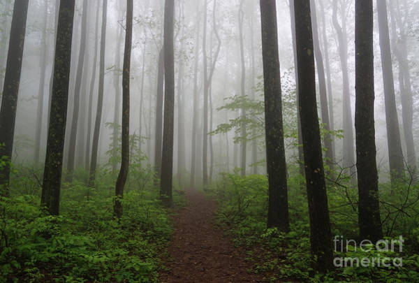 Photograph - Foggy Spring Forest by Rachel Cohen