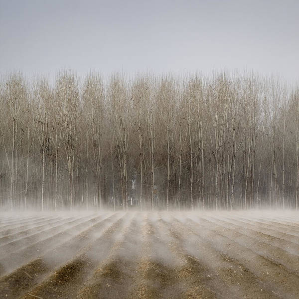 Trees In Fog Photograph - Foggy Trees by Antonio  Luis Martinez Cano