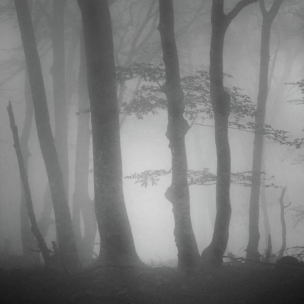 Photograph - Foggy Trees by Billy Currie Photography