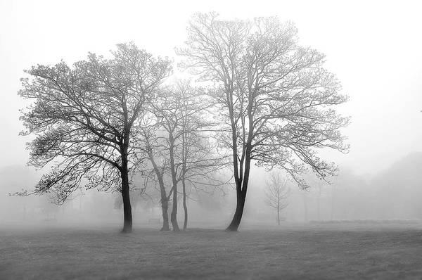 Wall Art - Photograph - Foggy Trees by Svetlana Sewell