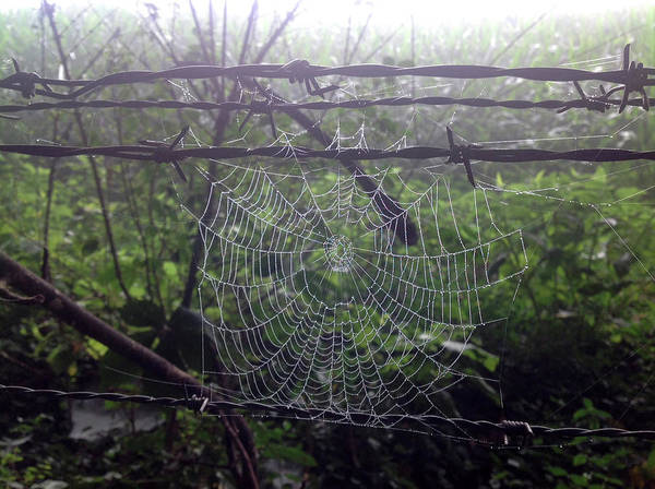 Photograph - Foggy Web by Ericamaxine Price