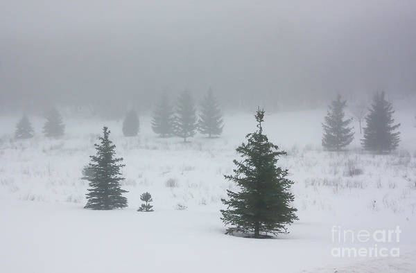 Photograph - Snow Fog by Kevin McCarthy
