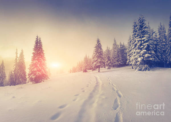 Wall Art - Photograph - Foggy Winter Sunrise In The Mountains by Andrew Mayovskyy
