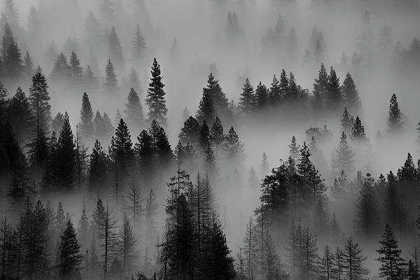 Photograph - Foggy Yosemite II by Jon Glaser