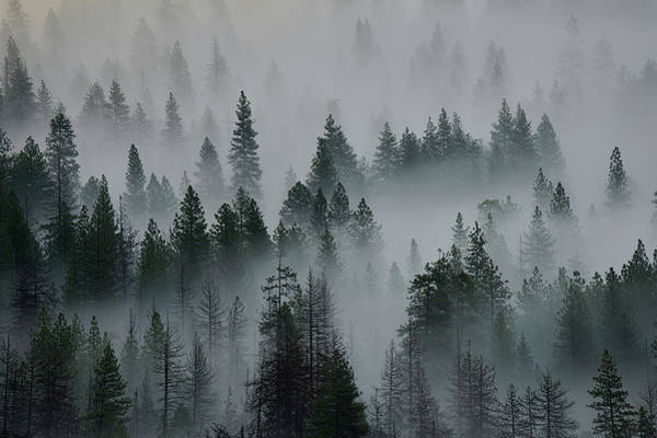 Wall Art - Photograph - Foggy Yosemite by Jon Glaser
