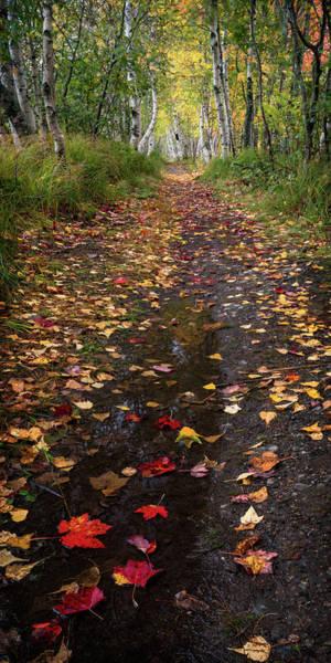 Photograph - Follow The Leaves by Darylann Leonard Photography