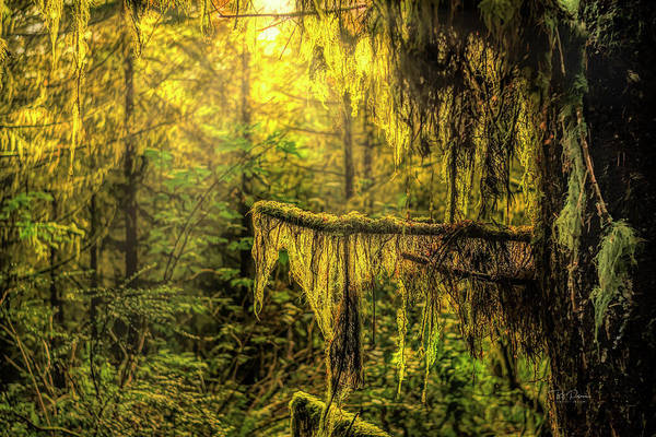 Photograph - Following The Moss by Bill Posner