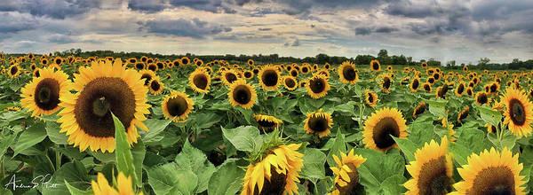 Photograph - Following The Sun by Andrea Platt