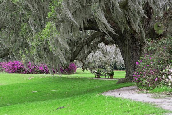 South Carolina Photograph - Footpath Beneath Giant Live Oak Draped by Adam Jones