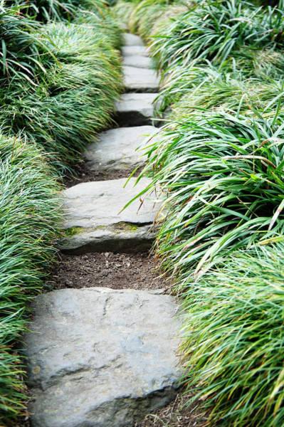Vertical Garden Photograph - Footpath Through Zen Garden, Uk by Liz Whitaker