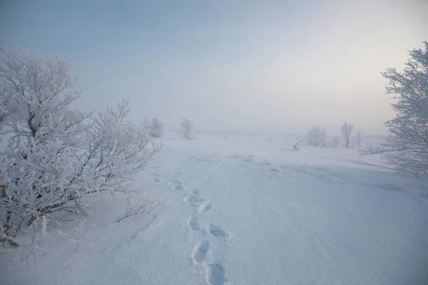 Mining Photograph - Footprint In Snow by Elin Enger