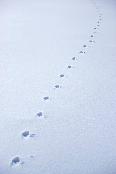 Sierra Nevada Photograph - Footprints On White Snow by Juananbarrosmoreno