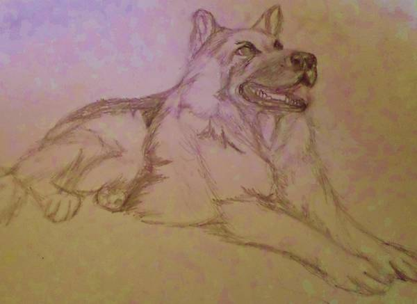 German Shepherd Drawing - For Donna by Christy Saunders Church