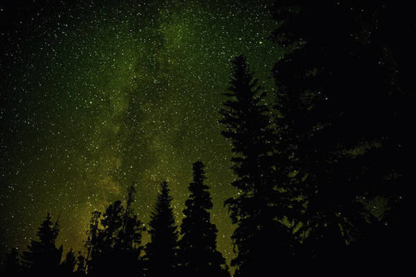 Okanagan Photograph - Forest And Milky Way At Night by Rontech2000