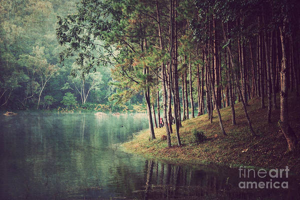Beautiful Sunrise Photograph - Forest Background ,vintage Style by Nonnakrit