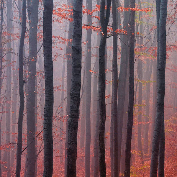 Photograph - Forest Barcode by Evgeni Dinev