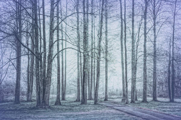 Photograph - Forest Beauty In Grays by Debra and Dave Vanderlaan
