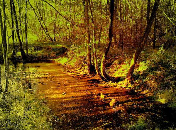 Gorecki Photograph - Forest Brook In The Morning Sun by Henryk Gorecki