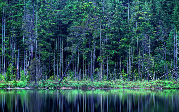 Digital Art - Forest By The Lake by Richard Farrington