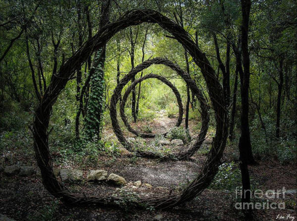 Sculpture - Forest Circle Trapped Installation  by Kasey Jones