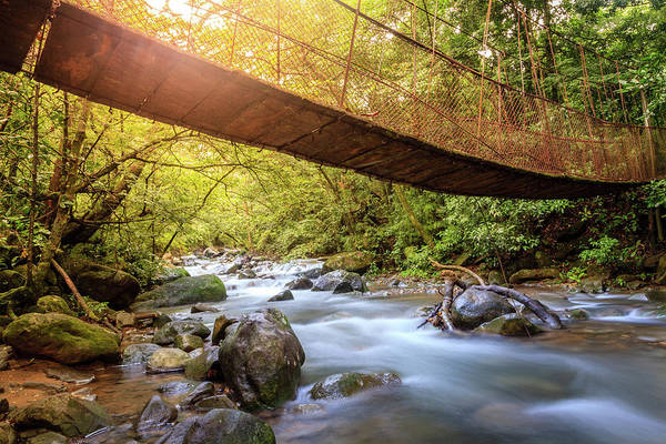 Wall Art - Photograph - Forest Creek In Rincon De La Vieja National Park In Costa Rica by Alexey Stiop