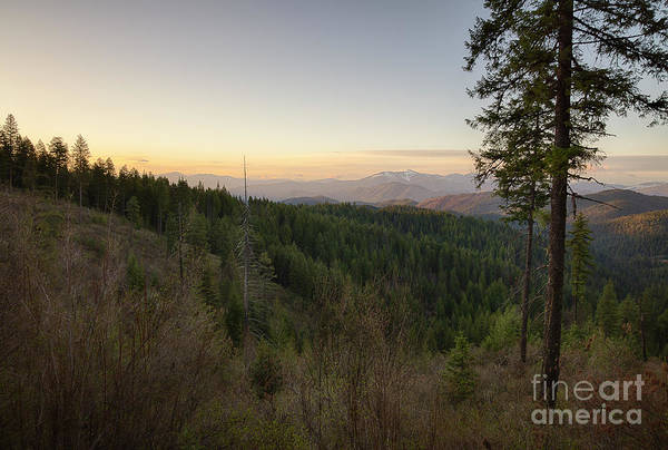 Wall Art - Photograph - Forest Dawn Spring by Idaho Scenic Images Linda Lantzy